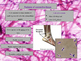 Histology - Connective Tissue