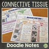 Connective Tissues Illustrated Notes