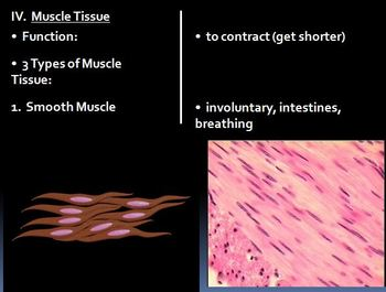 Histology - Tissues Notes Nerve and Muscle Tissue Powerpoint Presentation