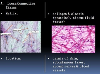 Histology Tissues Unit Anatomy and Physiology Biology Unit