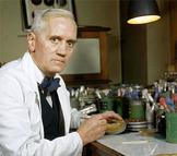 History Interpretation (Alexander Fleming story) - Year 7