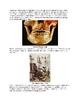 History of Dental Care for Kids