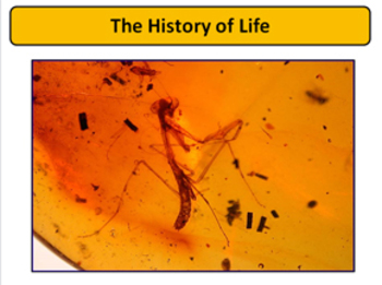 History of Life - Fossils