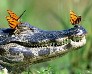 History of the Everglades Powerpoint
