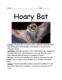 Hoary Bat - Galapagos Islands mammal informational article lesson questions