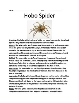 Hobo Spider - Review Article Facts Information Questions Vocabulary