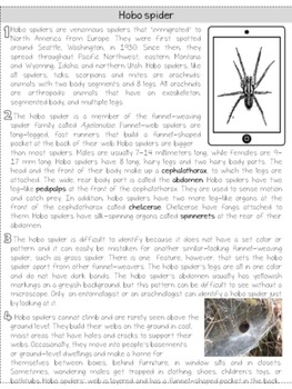 Hobo spider: leveled nonfiction, close reading passage; CCCSS aligned