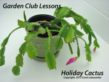 Holiday Gardening Lessons on Christmas Cactus - Plant Unit Activity Grades 2-5