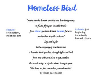 Homeless Bird Vocabulary