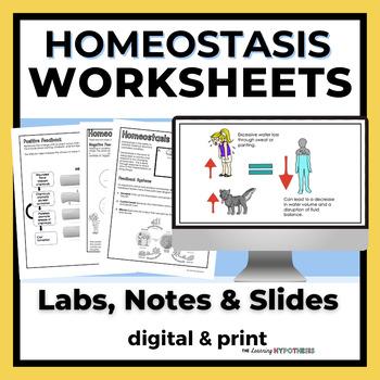 Homeostasis Lab, Notes & Slides