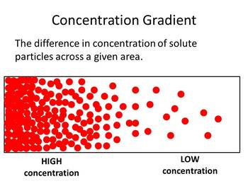 Homeostasis, Cell Membrane, Concentration Gradients, Solutions Clip Art