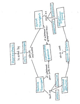 Cell Transport Concept Map Homeostasis & Cell Transport Concept Map with Answer Key by