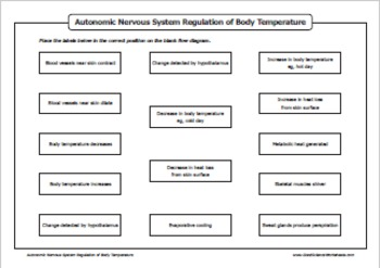 Homeostasis - Nervous System Regulation of Body Temperature