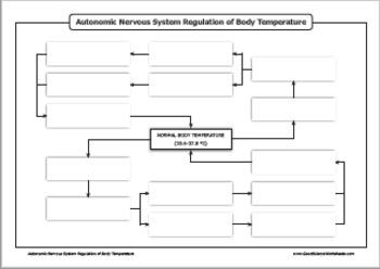 Homeostasis - Nervous System Regulation of Body Temperature