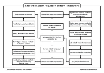 Homeostasis - Endocrine System Regulation of Body Temperature