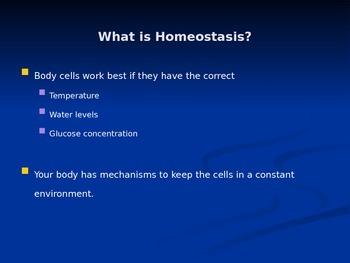 Homeostasis Explored (Human Body) - Presentation/Handout