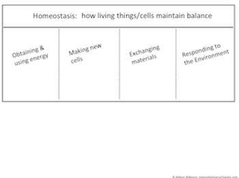 Homeostasis Graphic Organizer: Homeostasis-How Living Things Maintain Balance