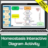 Homeostasis & Internal Feedback Mechanisms Graphic Organizer Game