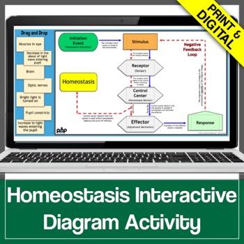 homeostasis internal feedback mechanisms graphic. Black Bedroom Furniture Sets. Home Design Ideas