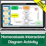 Homeostasis & Internal Feedback Mechanisms Graphic Organizer Game