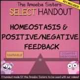 Homeostasis, Positive/Negative Feedback SELECT Handout + Key by Amoeba Sisters