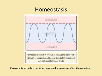 Homeostasis Power Point