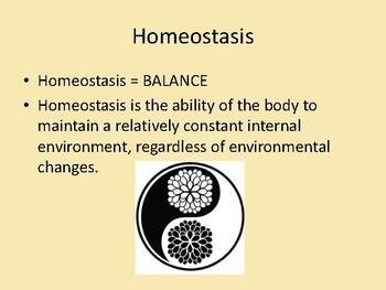 Homeostasis Power Point