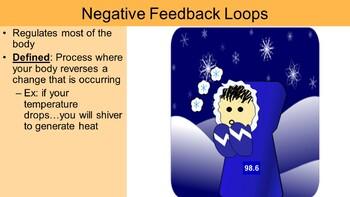 Homeostasis PowerPoint (& free student handout)