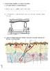Homeostasis Worksheet