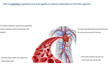 Homeostasis and Cell Processes
