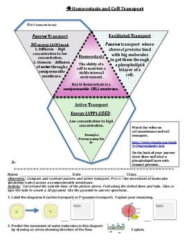 Cell transport diagram teaching resources teachers pay teachers homeostasis and cell transport homeostasis and cell transport ccuart Image collections