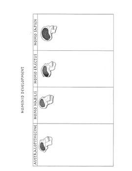 Hominid Development Chart