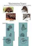 Homologous/ Analogous Structure Cladogram Evolution Activity