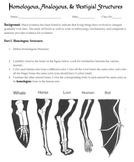 Homologous, Analogous, and Vestigial Structures