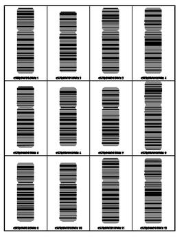 Homologous Chromosomes Genetics Cards Activities