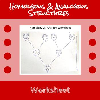 homologous and analogous structures worksheet by erin frankson tpt. Black Bedroom Furniture Sets. Home Design Ideas