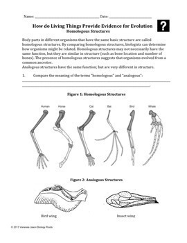 Evolution- Homologous and Vestigial Structures by Biology Roots | TpT