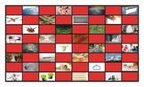 Homonyms-Homophones Checkerboard Game 2