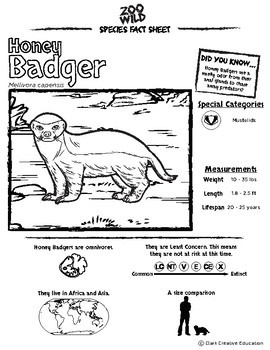 Honey Badger -- 10 Resources -- Coloring Pages, Reading & Activities