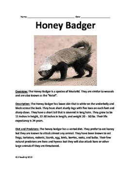 Honey Badger - Lesson article questions vocabulary facts information