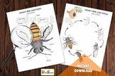 Honey Bee ANATOMY,  LIFE CYCLE & Spin wheel, Body parts, W