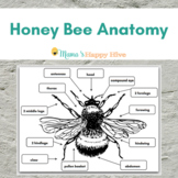 Honey Bee Anatomy Diagram