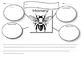 Honey Bee Graphic organizers