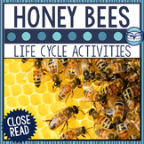 Honey Bee Life Cycle Close Reading Passage and Activities
