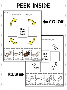 Vocabulary Activity - Honey Bee Life Cycle