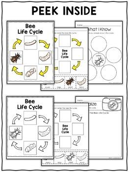 Honey Bee Life Cycle Activities
