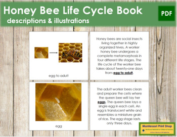 Honey Bee Life Cycle Book