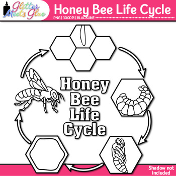 Honey Bee Life Cycle Clip Art {Great for Animal Groups & Insect Resources} B&W