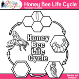 Honey Bee Life Cycle Clip Art   Great for Animal Groups & Insect Resources B&W