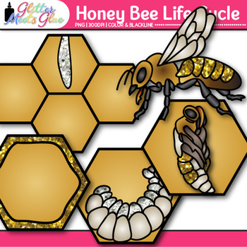 Honey Bee Life Cycle Clip Art {Great for Animal Groups, Insect, & Bug Resources}